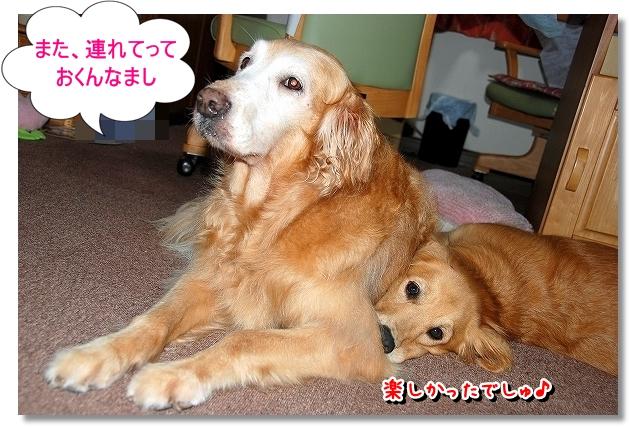 DSC_0143_20110825120325.jpg