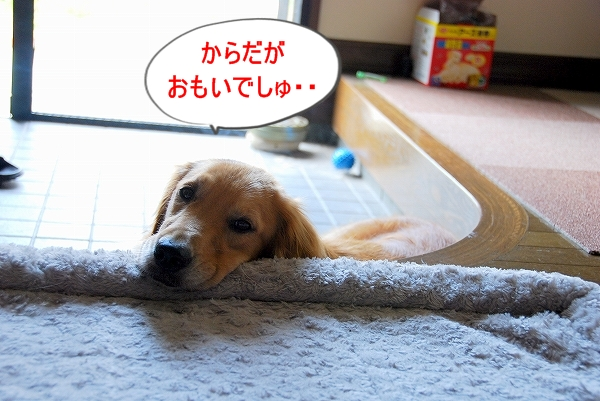 DSC_0147_20110825120325.jpg