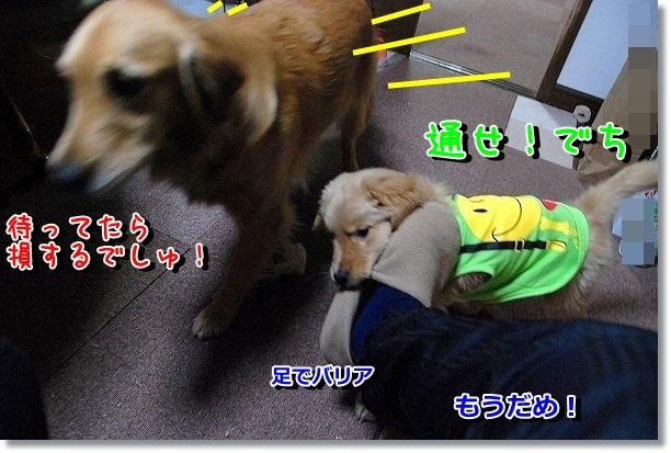 DSC_0151_20120302115710.jpg