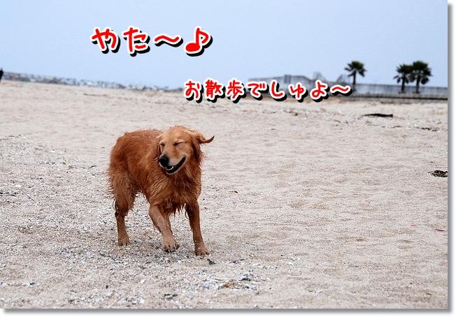 DSC_0152_20120208004801.jpg