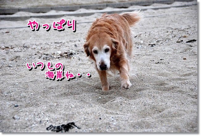 DSC_0154_20120208004843.jpg