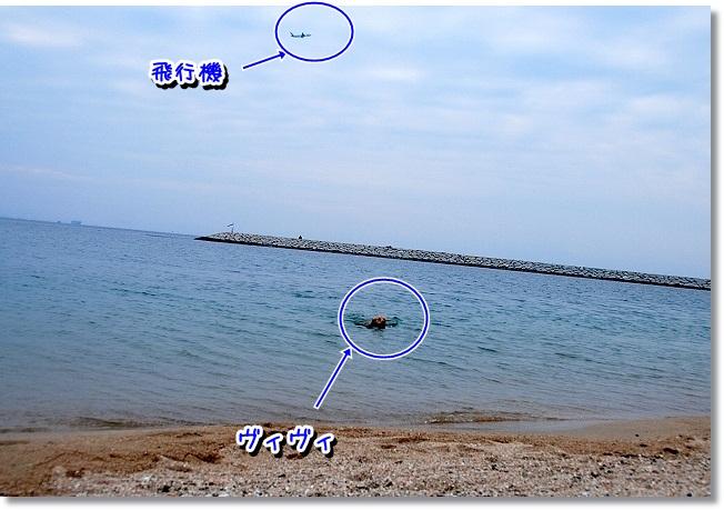 DSC_0156_20120208004842.jpg