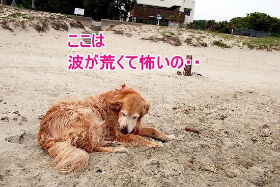 DSC_0158_20110518223653.jpg