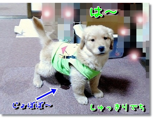 DSC_0159_20120302115710.jpg