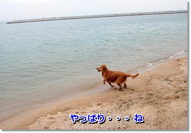 DSC_0160_20120208004842.jpg