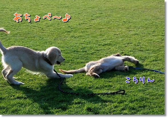 DSC_0173_20120408010806.jpg
