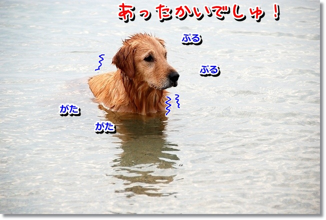 DSC_0177_20120208004913.jpg