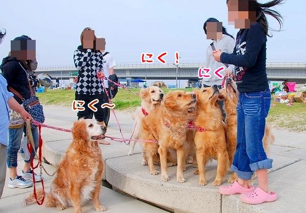 DSC_0180_20110505222904.jpg