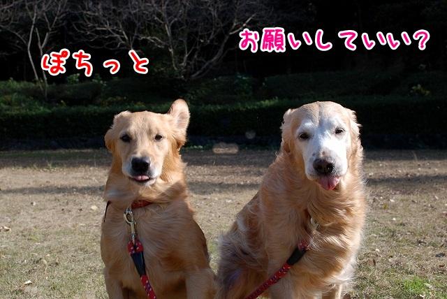 DSC_0181_20120115234750.jpg