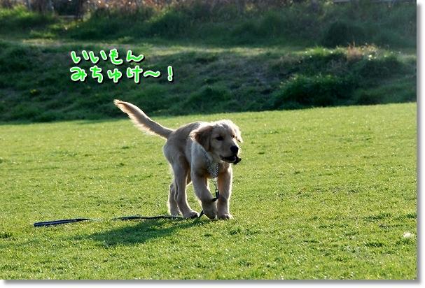 DSC_0184_20120408010804.jpg
