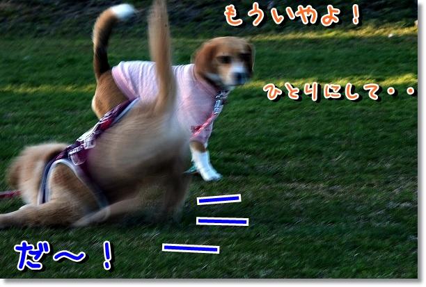 DSC_0185_20120314184848.jpg