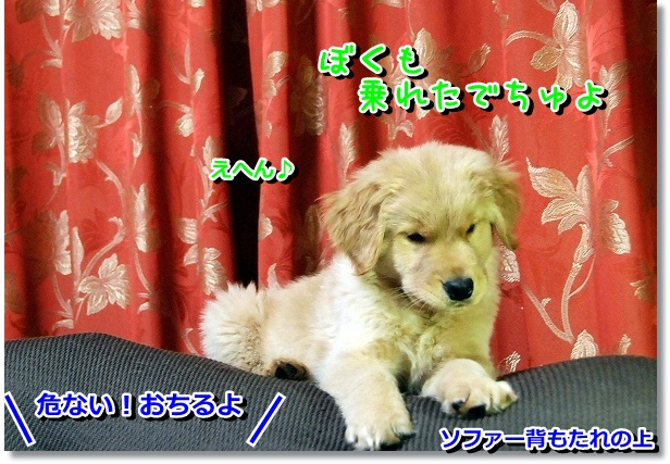 DSC_0186_20120229114612.jpg