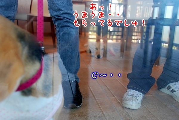 DSC_0190_20110531203122.jpg