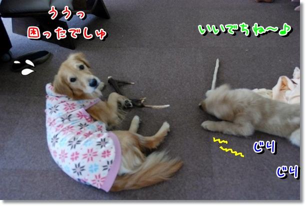 DSC_0191_20120301095732.jpg