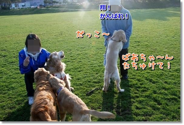 DSC_0191_20120409115313.jpg