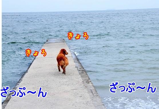 DSC_0193_20110518223653.jpg