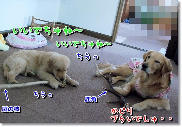 DSC_0193_20120301095732.jpg