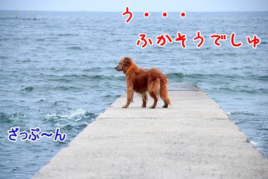 DSC_0195_20110518223653.jpg
