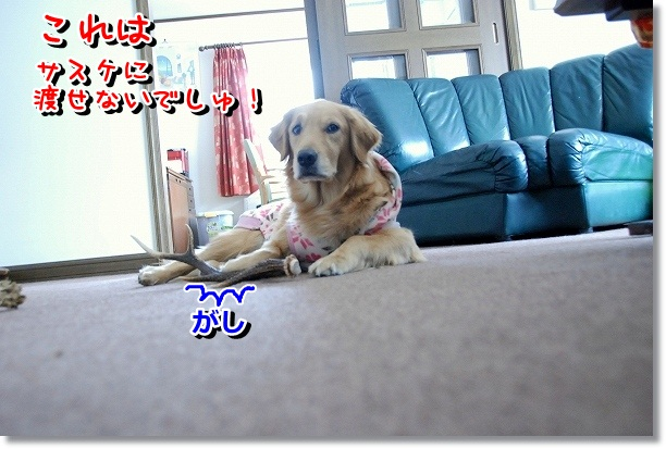 DSC_0195_20120301095732.jpg