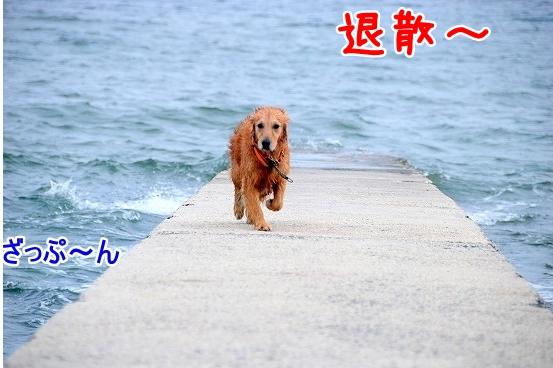 DSC_0196_20110518223653.jpg