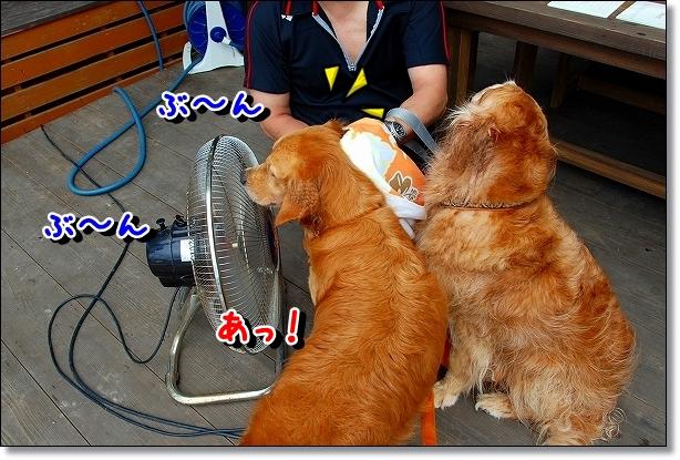 DSC_0196_20110801015941.jpg