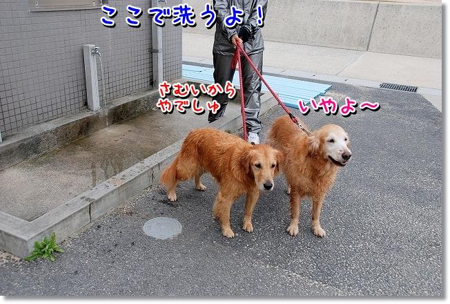 DSC_0198_20111126014716.jpg
