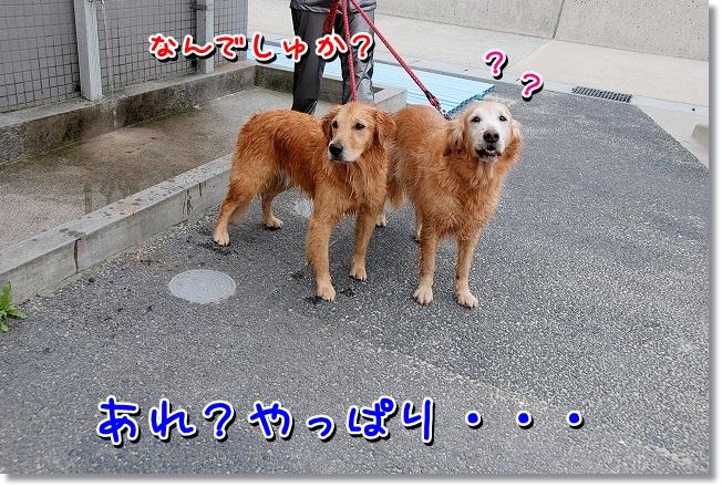 DSC_0199_20111126014716.jpg