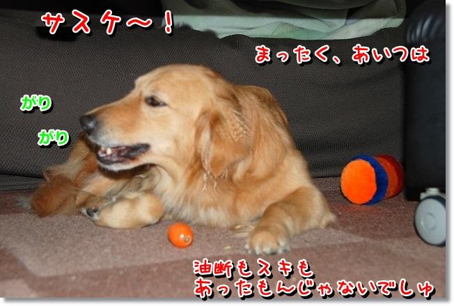 DSC_0199_20120217012418.jpg