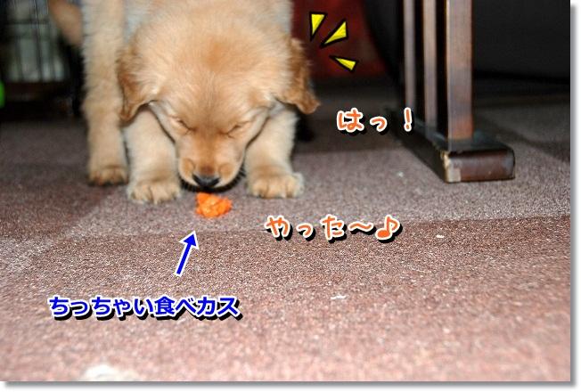 DSC_0200_20120217012418.jpg