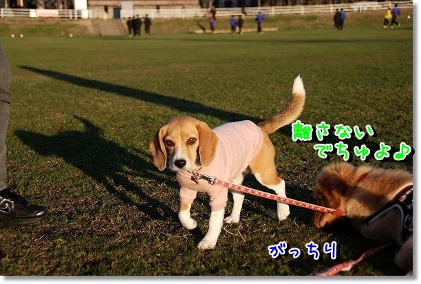 DSC_0203_20120314184927.jpg