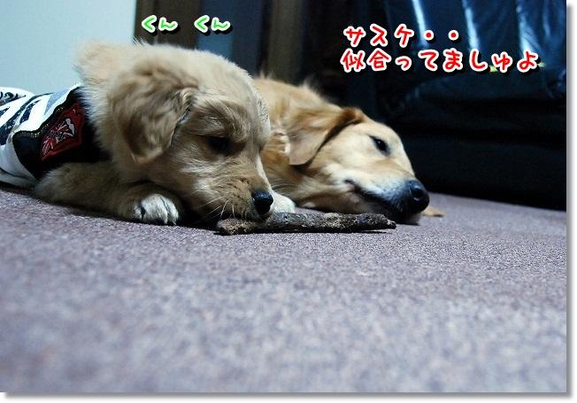 DSC_0206_20120131225755.jpg