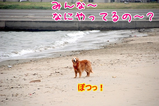DSC_0208_20110518223752.jpg