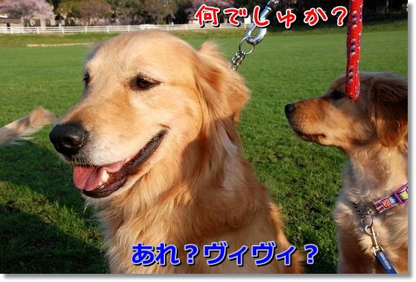 DSC_0210_20120409115602.jpg