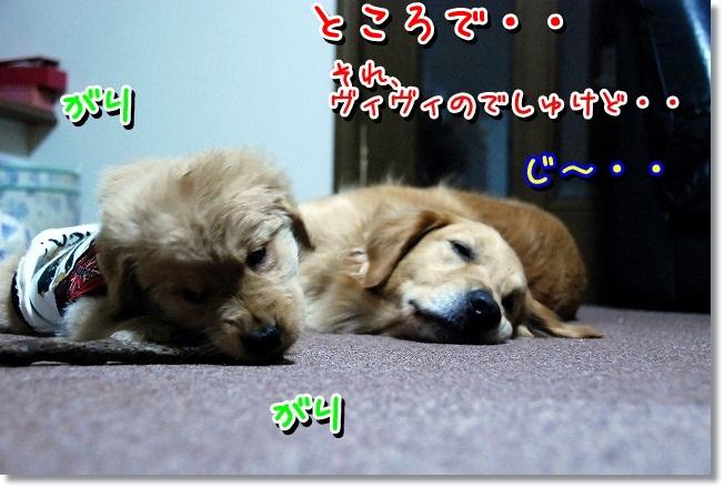 DSC_0215_20120131225754.jpg