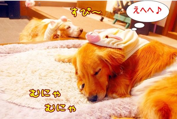 DSC_0217_20110517012641.jpg