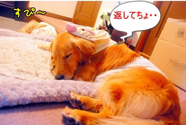 DSC_0219_20110517012641.jpg