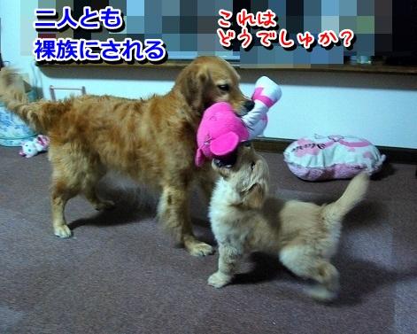 DSC_0221_20120217232433.jpg