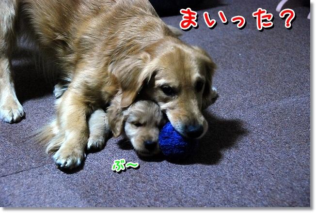 DSC_0225_20120131224934.jpg