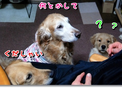 DSC_0228_20120229230533.jpg