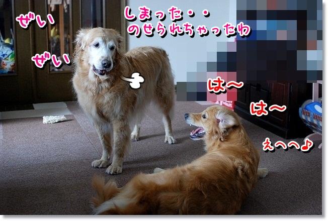 DSC_0229_20120210001750.jpg