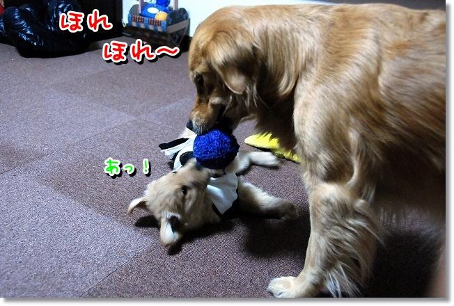 DSC_0231_20120131225010.jpg