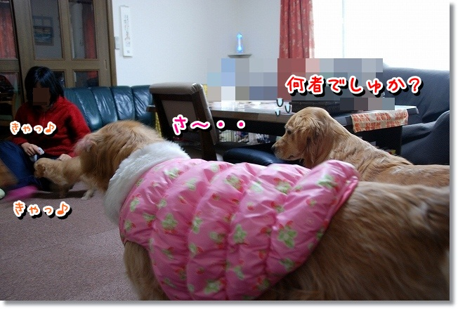 DSC_0234_20120120021740.jpg