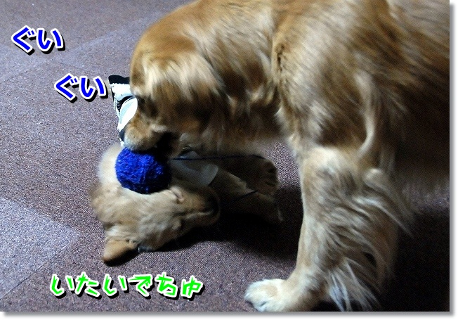 DSC_0236_20120131225010.jpg