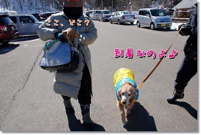 DSC_0247_20120220223436.jpg