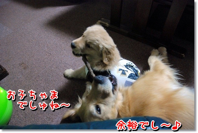 DSC_0252_20120131225010.jpg