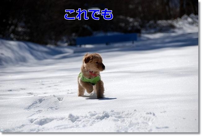 DSC_0272_20120220223651.jpg
