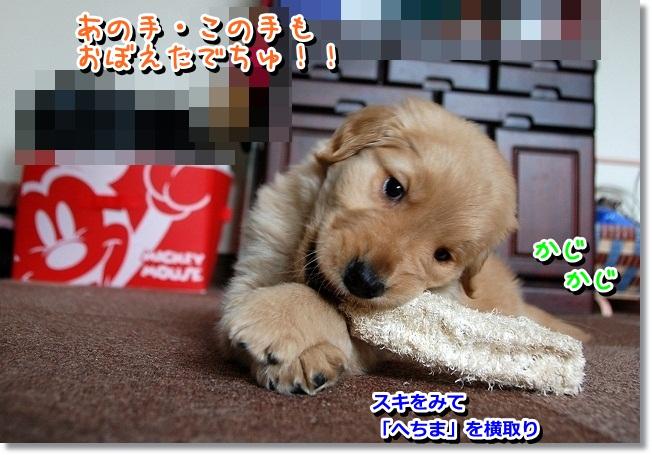 DSC_0276_20120210001839.jpg