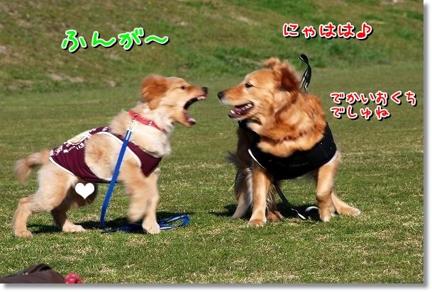 DSC_0287_20120407011813.jpg