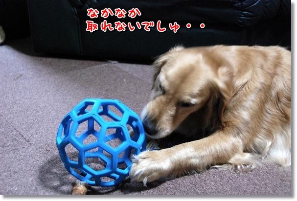DSC_0307_20120413200647.jpg
