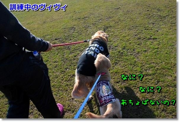 DSC_0311_20120407011842.jpg